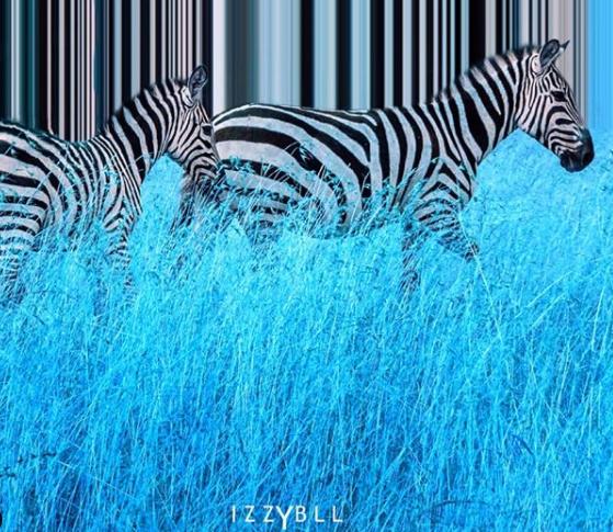 Zebras-edits-by-izzybll