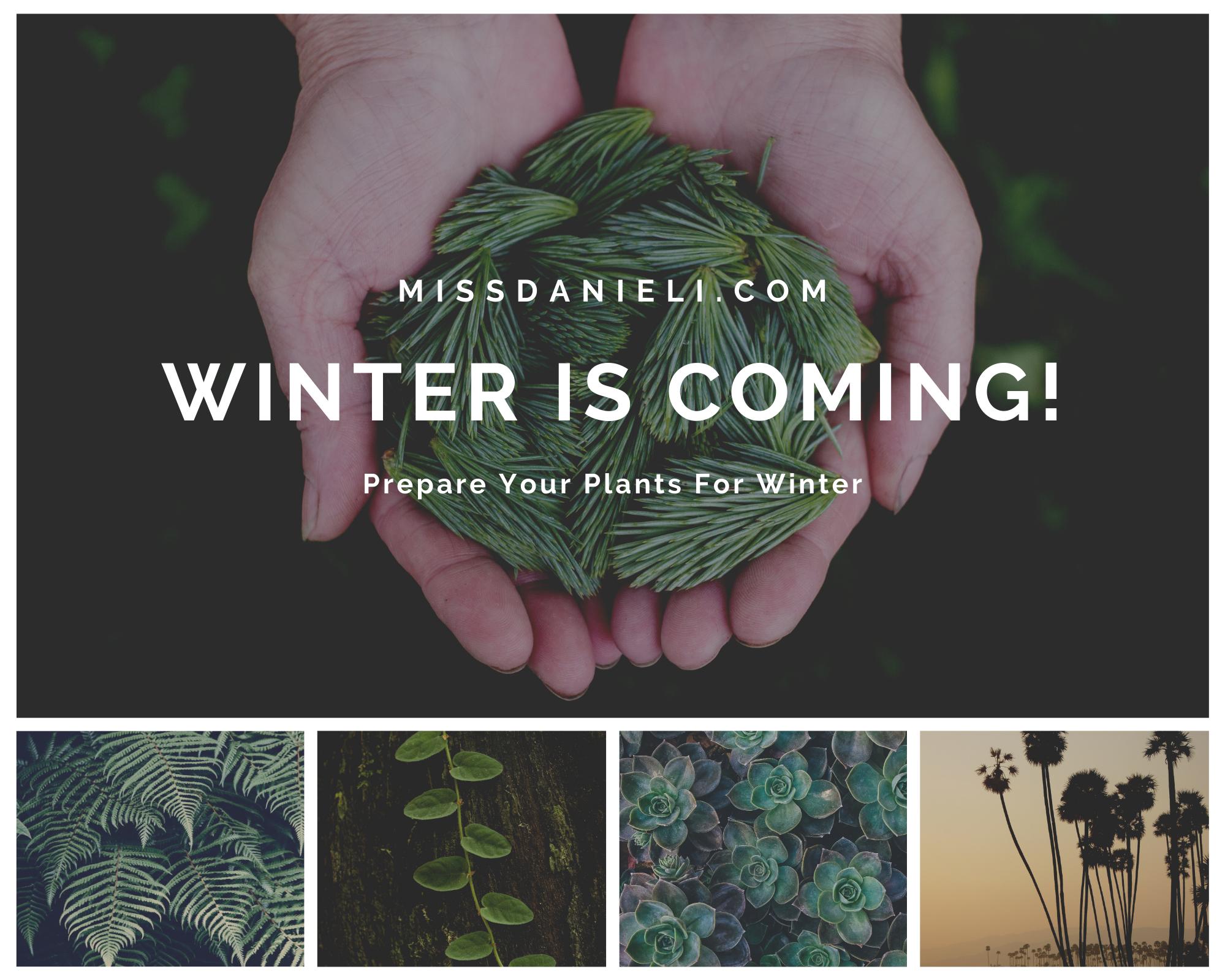 Winter-Plants-Preparations